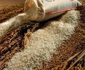 Sacos de algodon para arroz 2